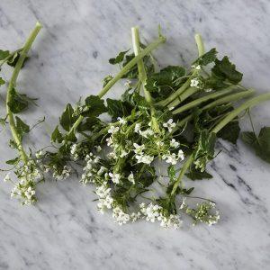 Wasabi flowers