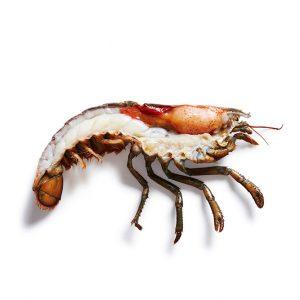 Half Lobster Split Small Chix 446/536